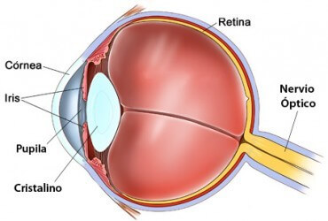 Presbyopia eye anatomy